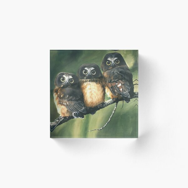 Saw Whet Owls Acrylic Block