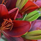 Lilies 1 by MIbitoflife