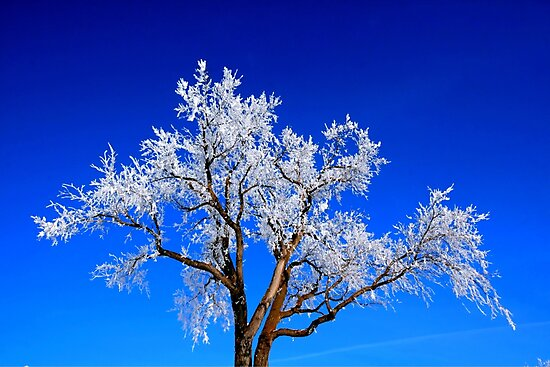 A Touch of Frost by Larry Trupp