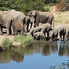 Elles at petes pond by Anthony Goldman