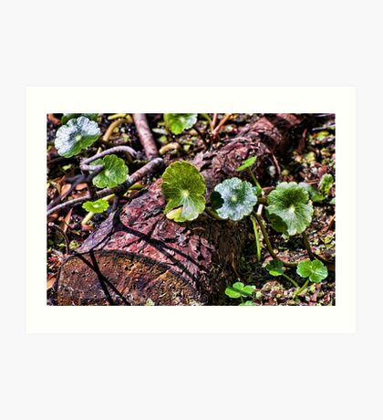 Swamp Undergrowth Art Print