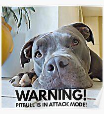 Cute Pitbull in Attack Mode Poster