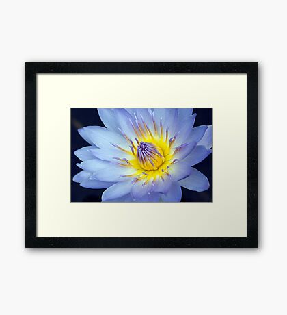 Feeling Blue - macro waterlilly Framed Print