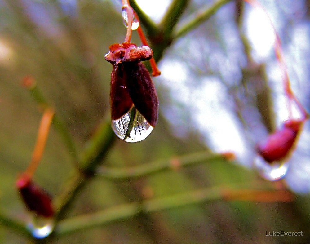 In a Raindrop by LukeEverett