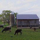 Bis die Kühe nach Hause kommen von vigor