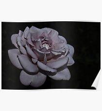 """"""" Midnight Rose """" Poster"""