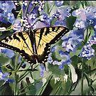 Yellow Swallowtail Butterfly by ferinefire