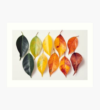 Colorful life in the nature Art Print