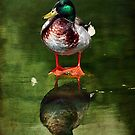 Just a Duck. by zzsuzsa