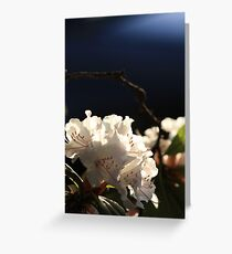 """Rhododendron"" Greeting Card"