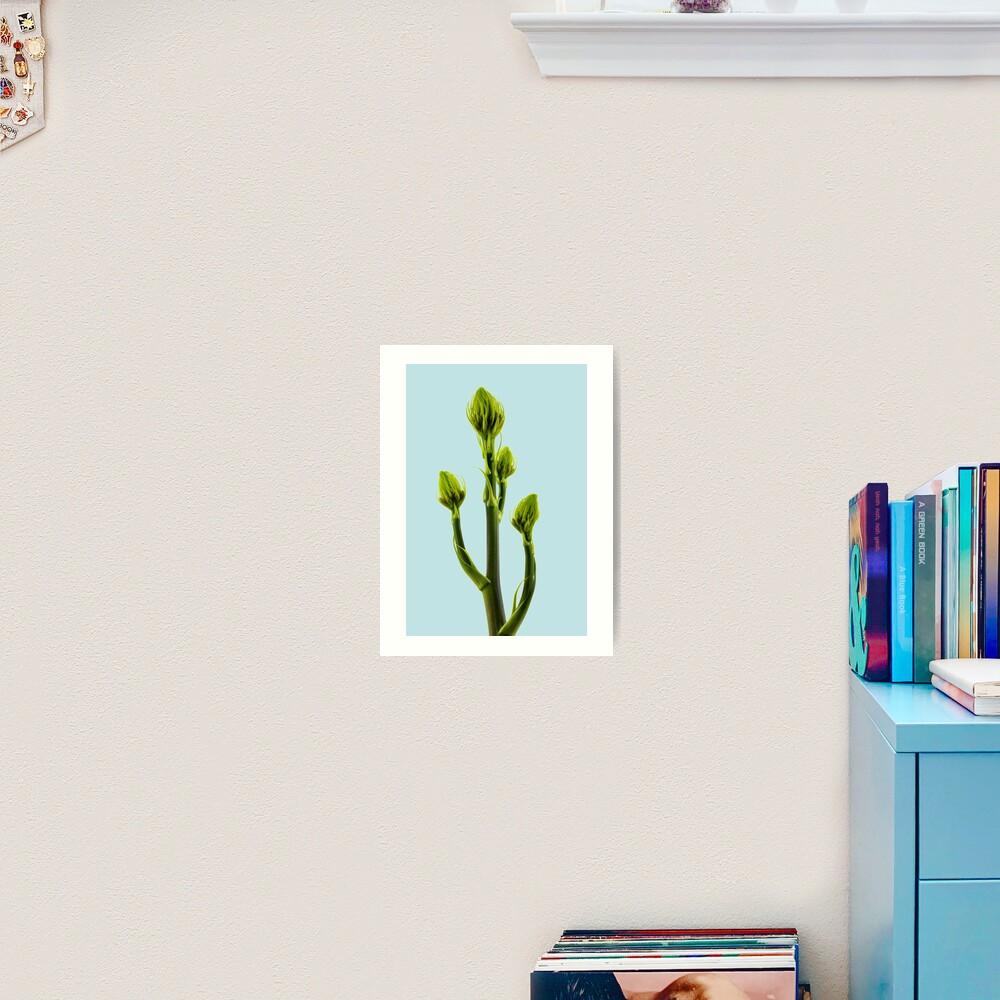 Aleo Vera flower buds Art Print