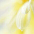 Buttercup Dreams by Stephanie Hillson