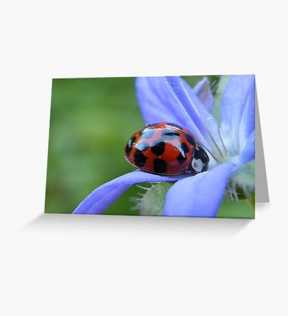 Spotted lady Greeting Card