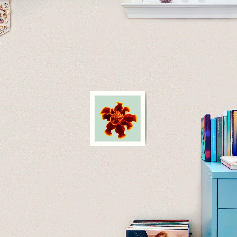 Marigold Flower Art Print