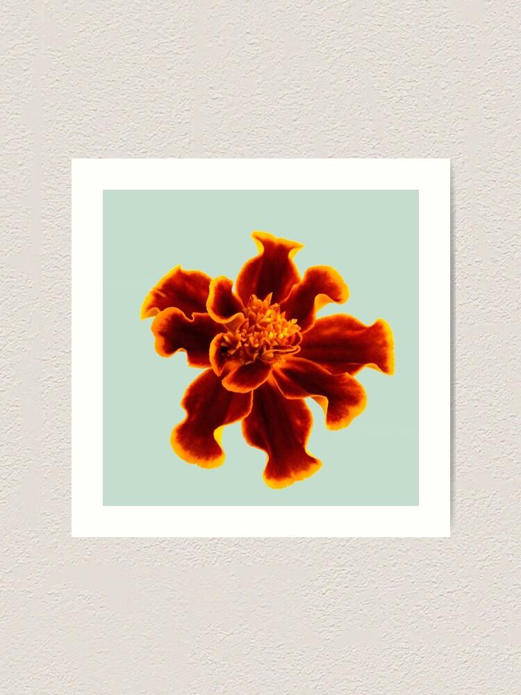 Alternate view of Marigold Flower Art Print