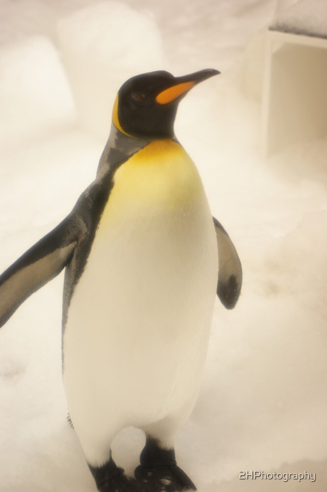 Penguin fun by 2HPhotography