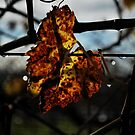 Autumn by Richard Owen