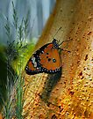 Forest Butterfly by Elaine  Manley