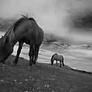 happy horses by Mitch  McFarlane