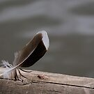 Bird Feather in log by lake by David Carton