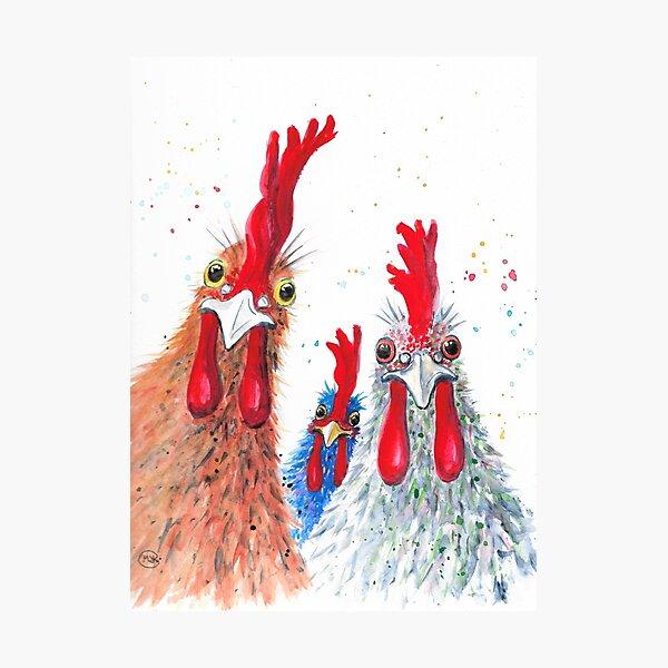 Chicken Ladies, Hen, Chicken, Rooster, Bird Photographic Print