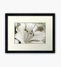 Flower in Black and White Framed Print