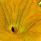 BeeSt...ing by IzzyGumbo