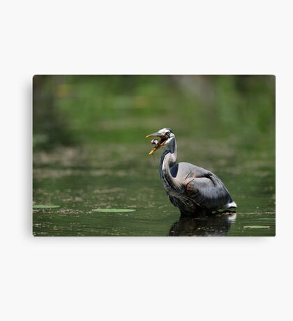 Tossing my Fish  Canvas Print
