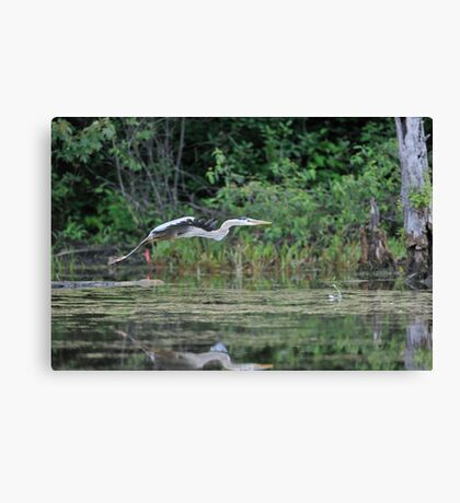 Off to find a quiet place Canvas Print
