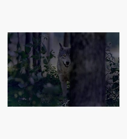 Night Visitor 2 Photographic Print