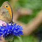 Meadow Brown by relayer51