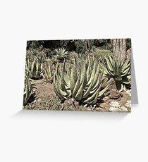 Untitled, California Greeting Card