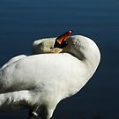 Swan by Sophia Grace