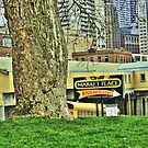 Urban Tree Surviving in City by lincolngraham