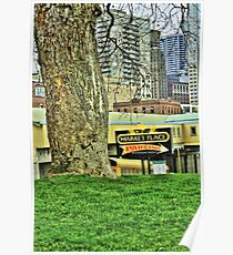 Urban Tree Surviving in City Poster