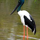 Jabiru - black necked stork by Jenny Dean