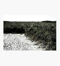 Dry Earth Photographic Print