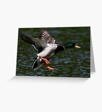Flight Of The Mallard Greeting Card