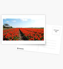 There will always be the tulips Postcards