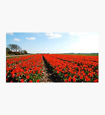 There will always be the tulips Photographic Print