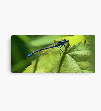 Blue Damsel Dragonfly Canvas Print