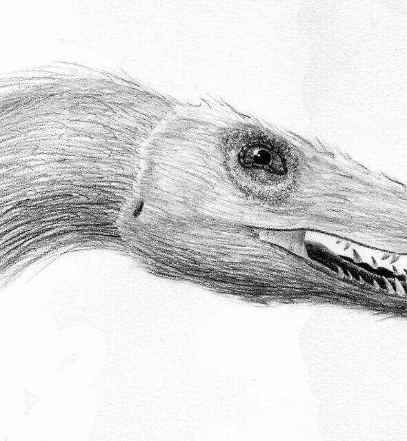 Velociraptor mongoliensis by Sean Craven