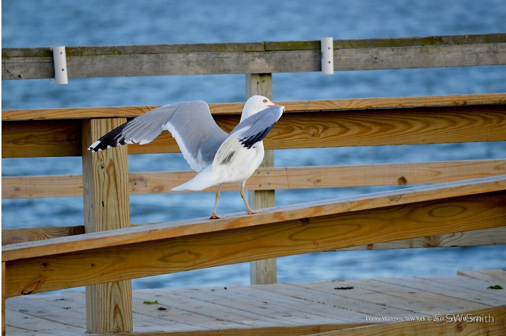 Larus Smithsonianus - American Herring Gull | Center Moriches, New York  by © Sophie W. Smith
