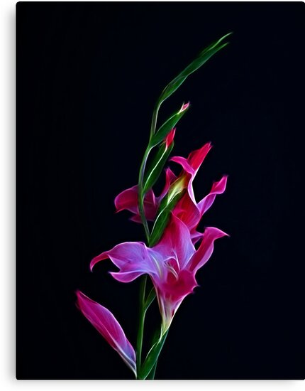 Gladiola Opening by Sandy Keeton