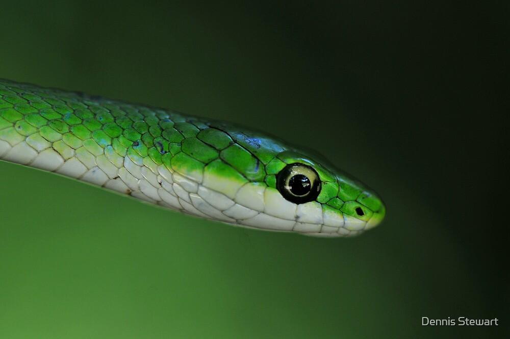 Rough Green Snake by Dennis Stewart