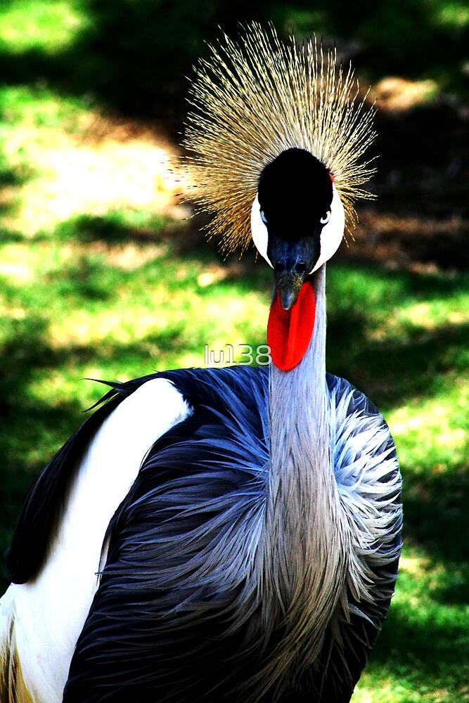 Colourful Bird, San Diego by lu138