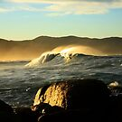 redbill beach swell. bicheno, tasmania by tim buckley | bodhiimages