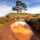 Creek crossing. by Steve Chapple