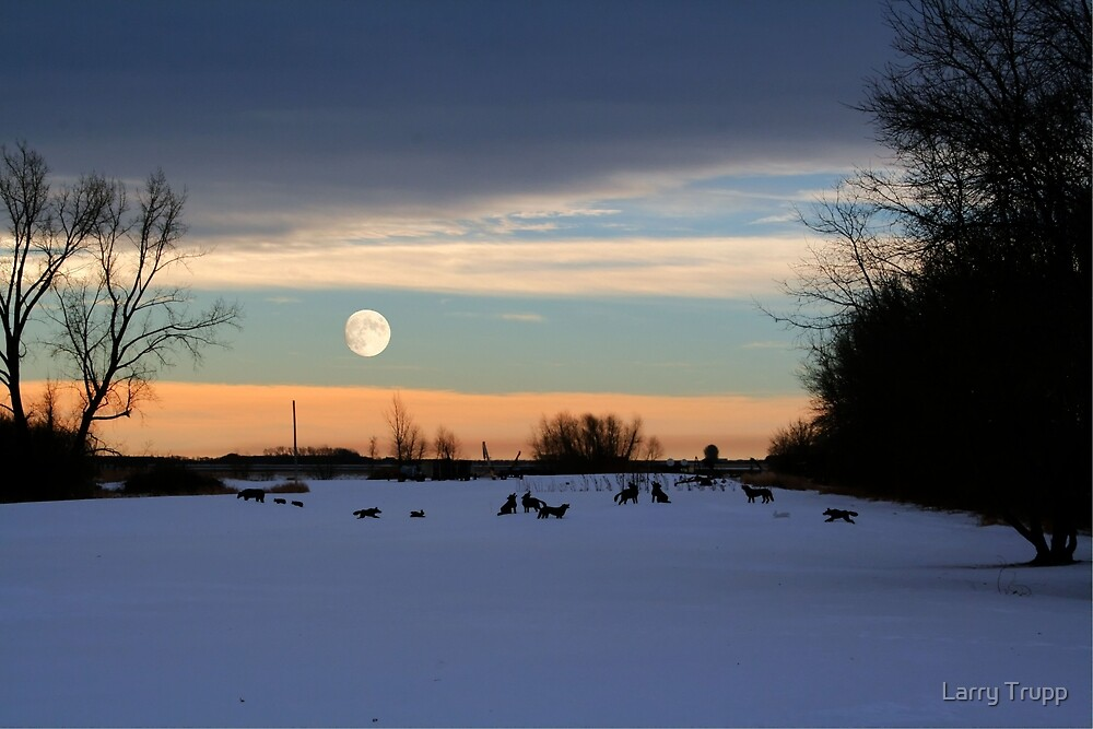 Coyote Moon by Larry Trupp