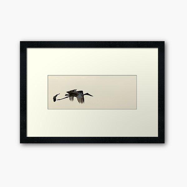Jabiru Stork Framed Art Print